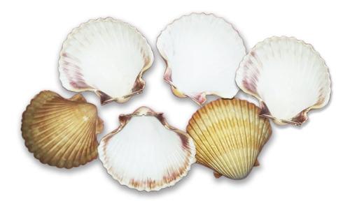 concha shell vieira grande orgânico pacote com 10 unidades