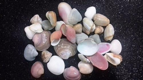 conchas do mar (pacotes com 200 gramas)