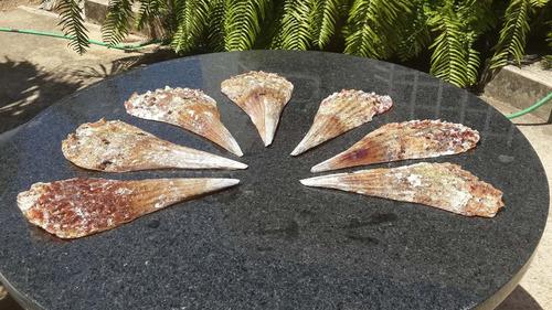 conchas para centros de mesa pasapalo bodas fiestas de playa