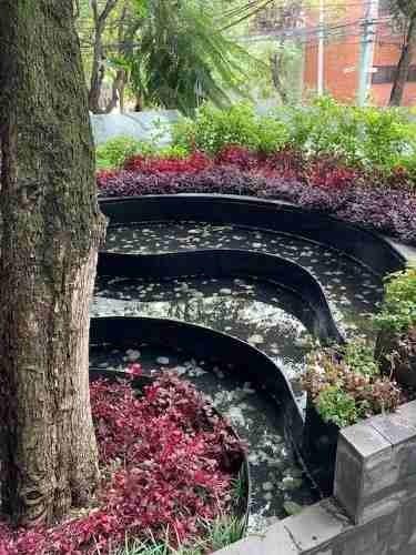 condesa trees, departamento en renta