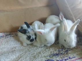 Con De Pdf Leon Mascota Orejas Cabeza Conejo Caídas Crias PXw80nkO