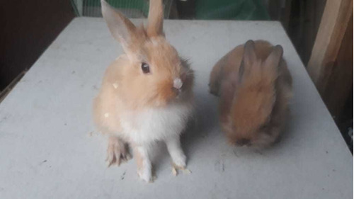 conejos.