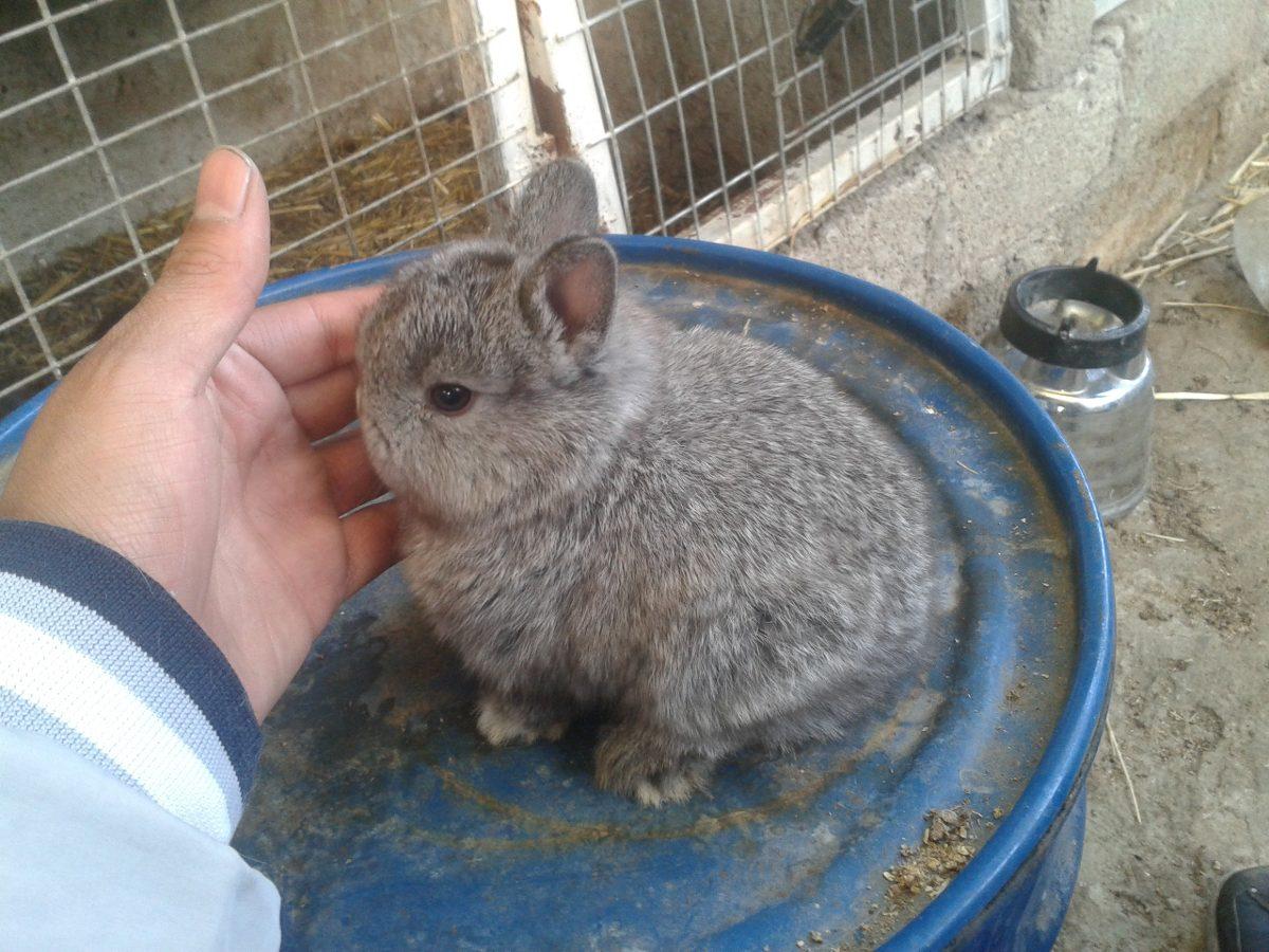 Conejos enanos dwarf los m s pekes varios colores en mercado libre - Casas para conejos enanos ...