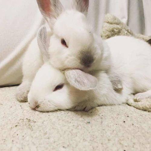conejos hembras y machos