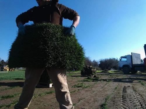 construcción de jardinería y paisajismo
