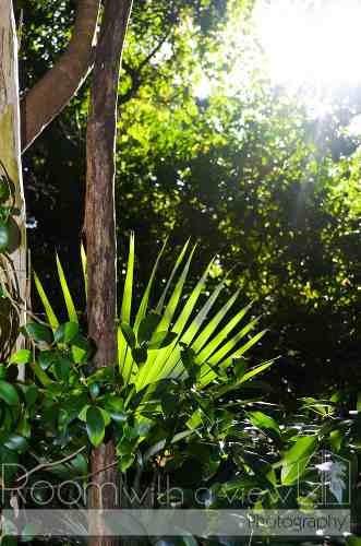 construya la casa de sus sueños en la riviera maya
