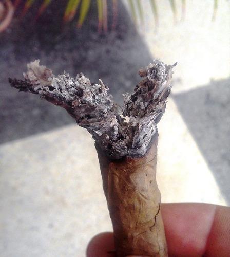 consulta espirituales trabajos amarres amor dinero tabaco