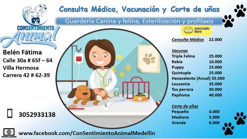 consulta médica veterinaria