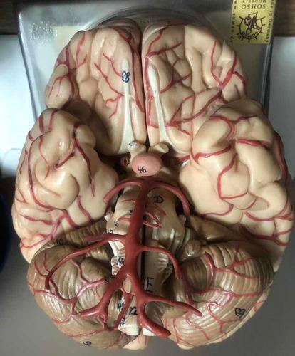 consulta neurocirugia