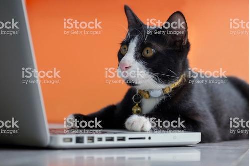 consulta veterinaria online por videollamada c turno previo.