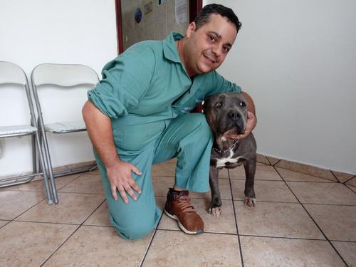 consultoria comportamental canina on line com especialista