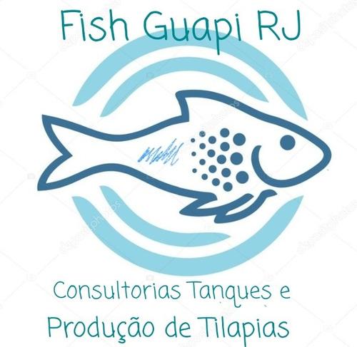 consultoria peixes tilápia