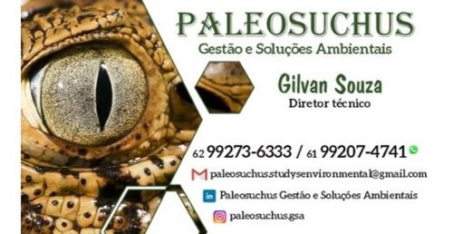 consultoria pgrs