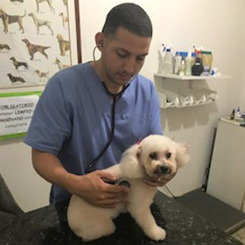 consultorio veterinario peluqueria canina