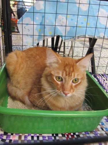 contrata se  veterinario administrador com experiência.