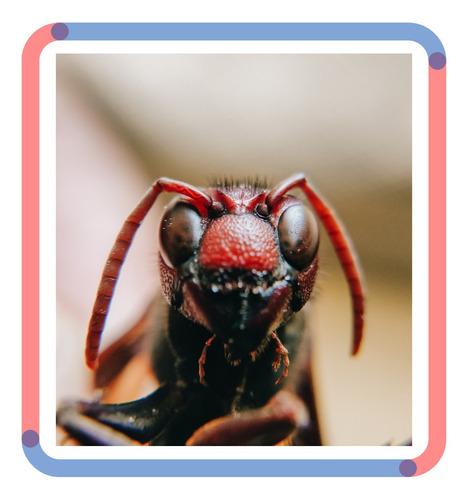 control de plagas: cucarachas, murciélagos, mosquitos y mas.