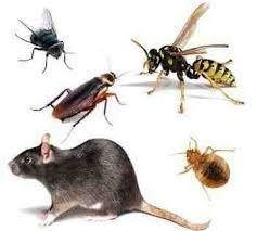 control de plagas fumigacion ratas cucaracha pulgas empresa