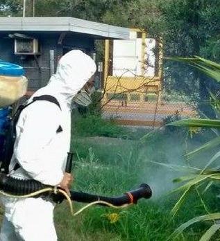 control de plagas fumigaciones desinfección roedores
