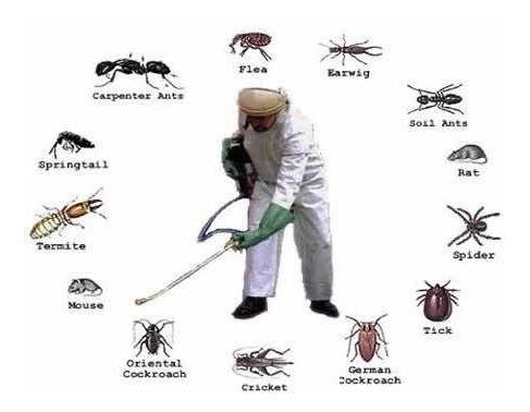 control de todo tipo de plagas/ rápida respuesta/ desde 1997