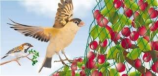 control plaga de palomas (malla antipajaro)