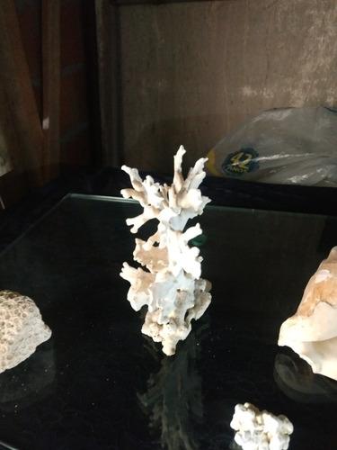 coral para ornamentar aquário