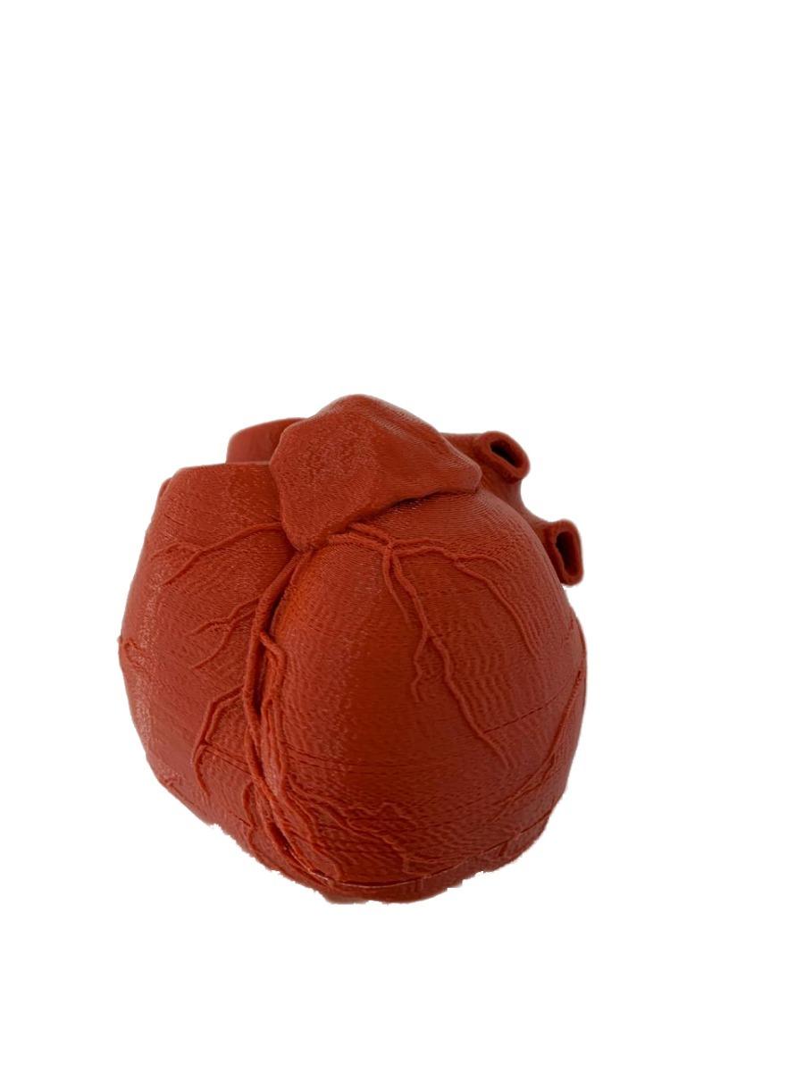 Corazón Humano 3d Para Estudio De Medicina Anatomía 85000 En