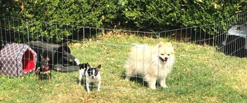 corral para perro ultra economico 60cm alto 6 paneles