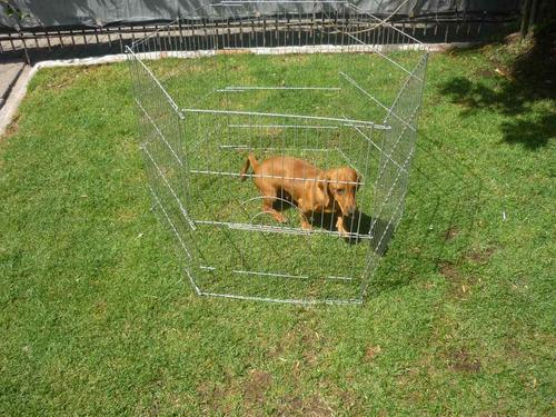 corral para perros reforzado de 70cm de alto con puerta