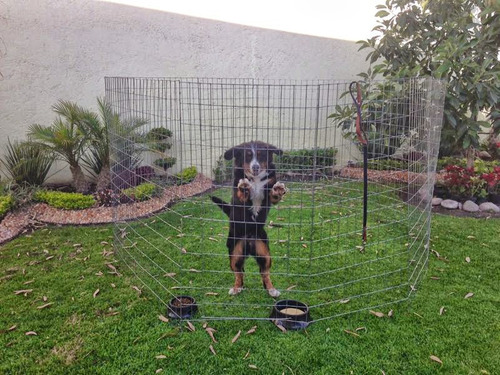 corral perros reforzado 1.5mt alto 8 paneles dog play pen
