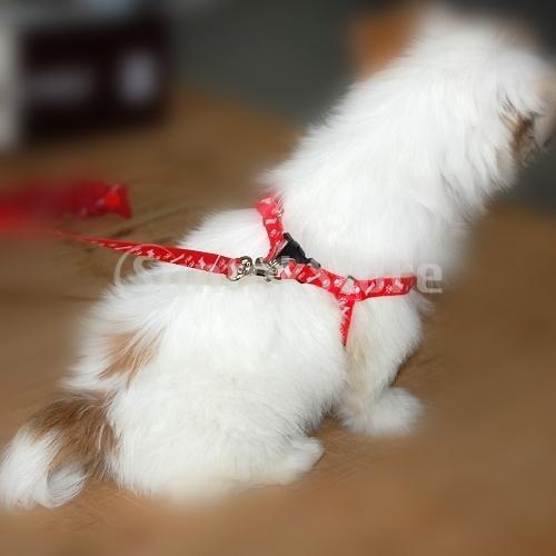correa, arnés ajustable, perro pequeños