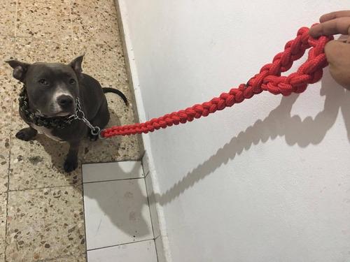 correa collar perro.