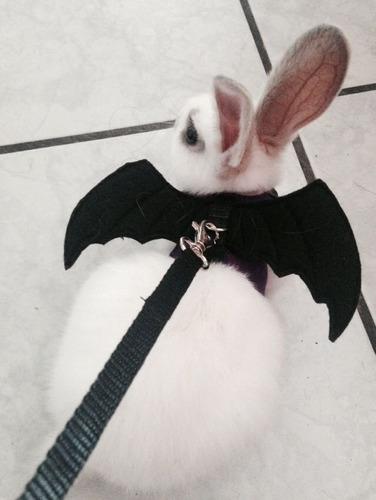 correa mascota perro pechera arnes