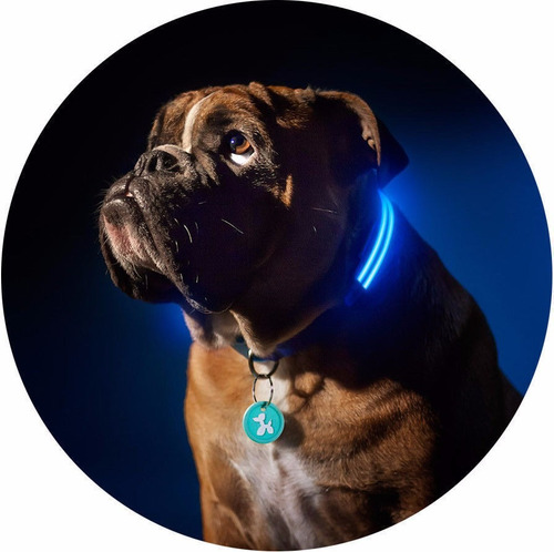 correa perro mascota