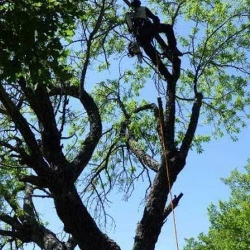 corte de árboles