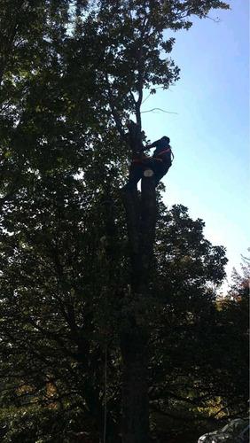corte de árboles, podas y mantenimiento de jardines.
