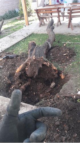 corte de césped y poda de árboles