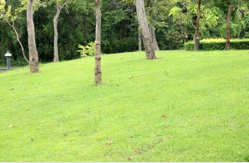 corte de grama em sítios  terreno empresa limpeza de jardim