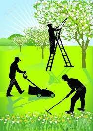 corte de pasto arboles limpieza de fondos terrenos escombros
