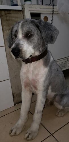 corte de pelo canino a domicilio