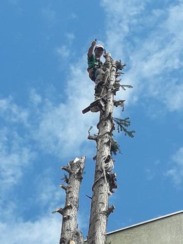 corte e poda de árvores em curitiba. wilson jardinagem.