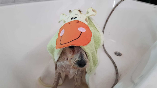 corté y baño
