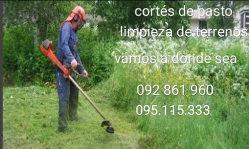 cortes de pasto podas limpieza de terrenos