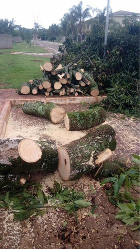 cortes e podas de árvores