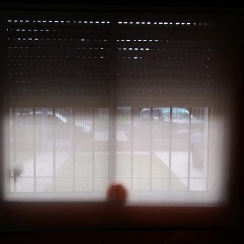 cortina roller
