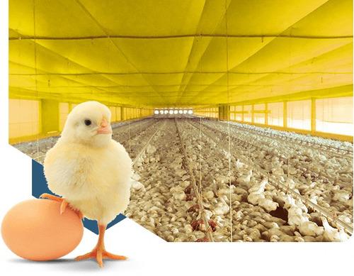 cortinas avicolas naranja azul amarillo verde blanco y negro