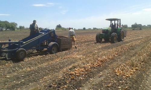 cosechadora de cebolla y papa