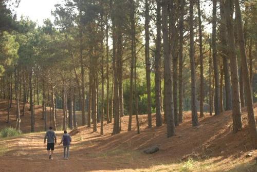 countries y barrios cerrados venta bosque