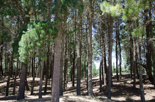 countries y barrios cerrados venta bosque