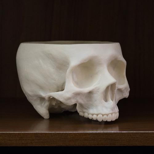 cráneo, calavera, cofre, baúl, maceta, cactus