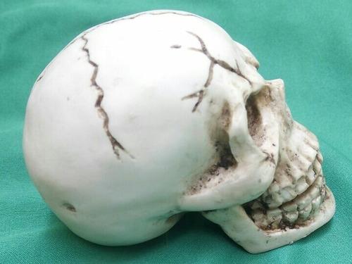 craneo calavera humana de resina , mandíbula articulada.